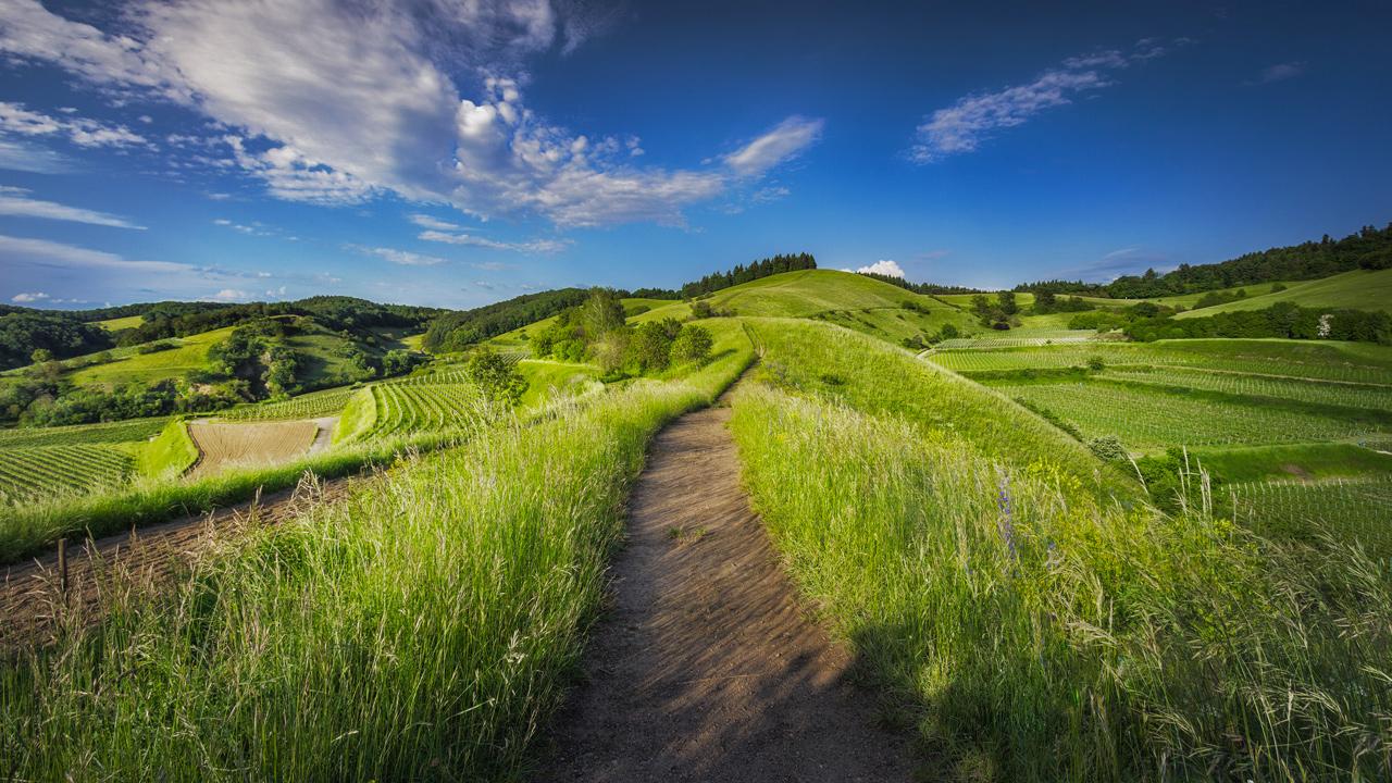 Corso: Marketing per Agriturismi - Pontassieve - Toscana Formazione
