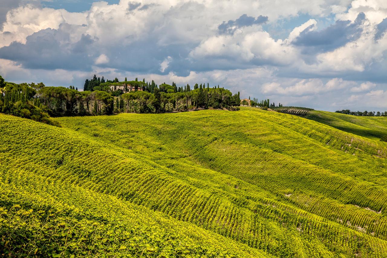 Corso CFT: Web Marketing per Agriturismi - San Casciano Val di Pesa - Toscana Formazione
