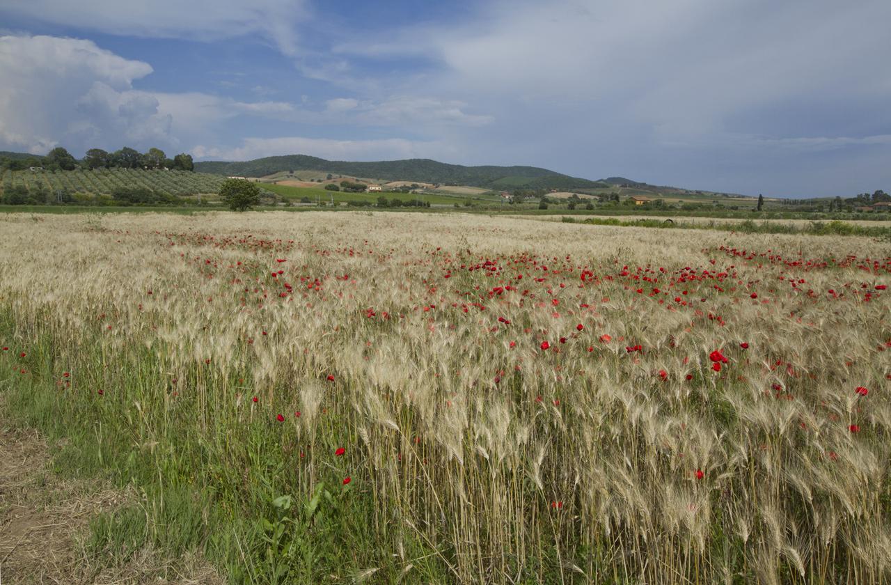 Corso Terra Cognita Maremmana - Toscana Formazione