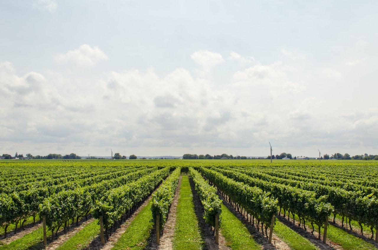 Gestione del processo di vinificazione - aperte dal 14 maggio le iscrizioni presso Chiantiform - San Casciano Val di Pesa (FI) - Toscana Formazione